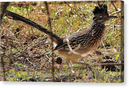 Off The Roadrunner Canvas Print by David Pauley