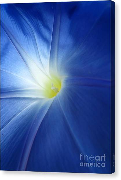 Oh Heavenly Blue 1 Canvas Print