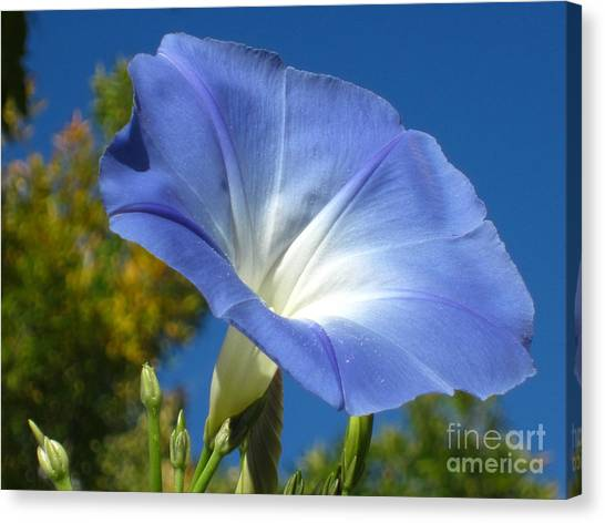 Oh Heavenly Blue 2 Canvas Print