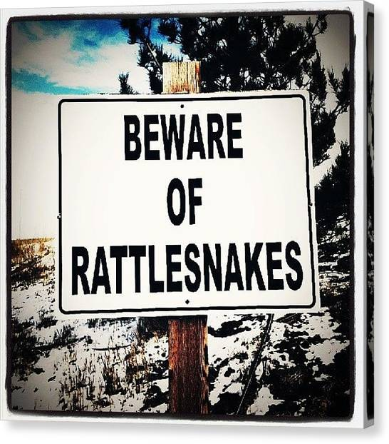 Rattlesnakes Canvas Print - Oh. Its Like That. #rattlesnakes by Tecia Elston