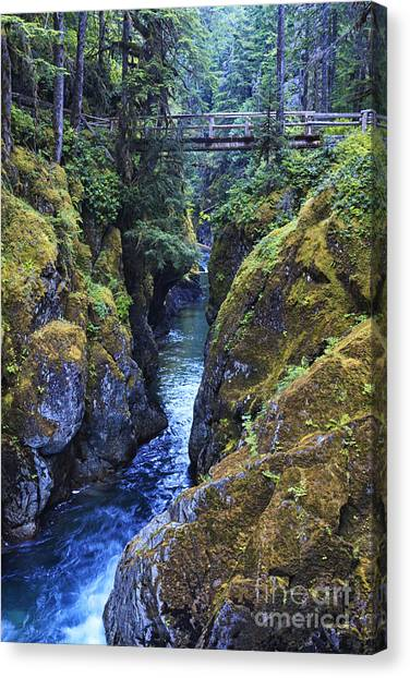 Beauty Mark Canvas Print - Ohanapecosh River by Mark Kiver