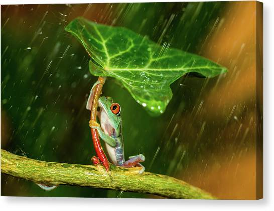 Frogs Canvas Print - Ohh Noo :( It's Raining by Kutub Uddin