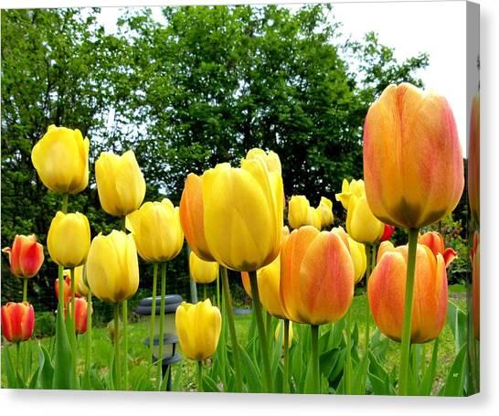 Okanagan Valley Canvas Print - Okanagan Valley Tulips by Will Borden