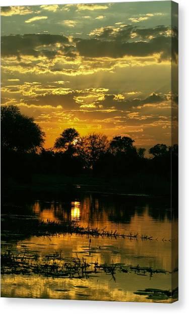 Okavango Swamp Canvas Print - Okavango Sunset by Amanda Stadther