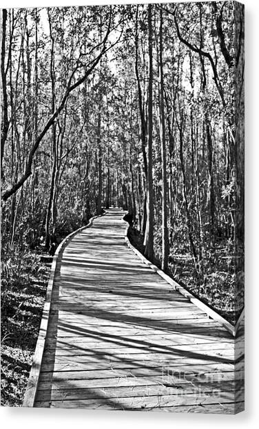 Okefenokee Canvas Print - Okefenokee Boardwalk by Southern Photo