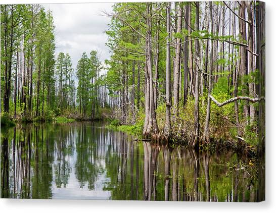 Okefenokee Canvas Print - Okefenokee National Wildlife Refuge by Jim West/science Photo Library