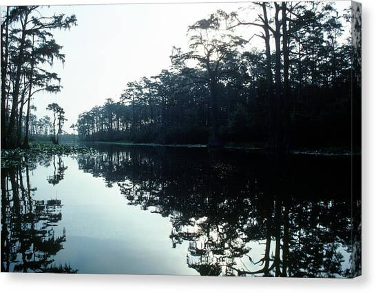 Okefenokee Canvas Print - Okefenokee Swamp by Jose Azel