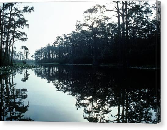 Okefenokee Canvas Print - Okefenokee Swamp by Jose Azel