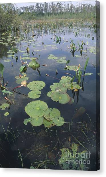Okefenokee Canvas Print - Okefenokee Swamp by William H. Mullins