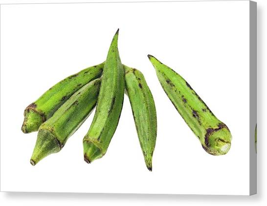 Gumbo Canvas Print - Okra by Geoff Kidd/science Photo Library