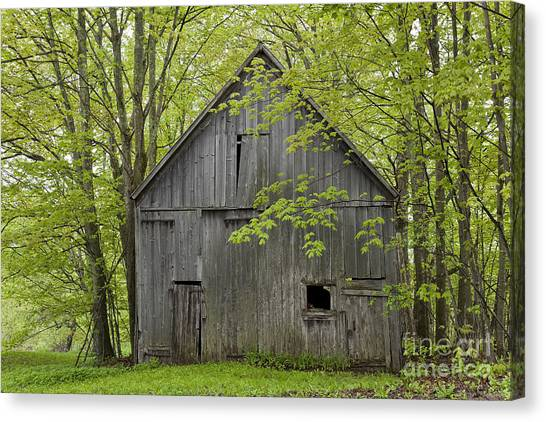 Old Barn In Spring Woods Canvas Print