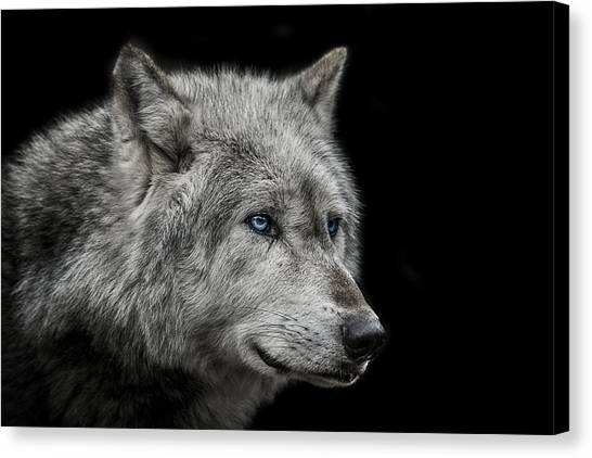 Small Mammals Canvas Print - Old Blue Eyes by Paul Neville