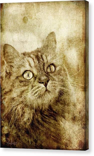 Old Fashion Cat Canvas Print