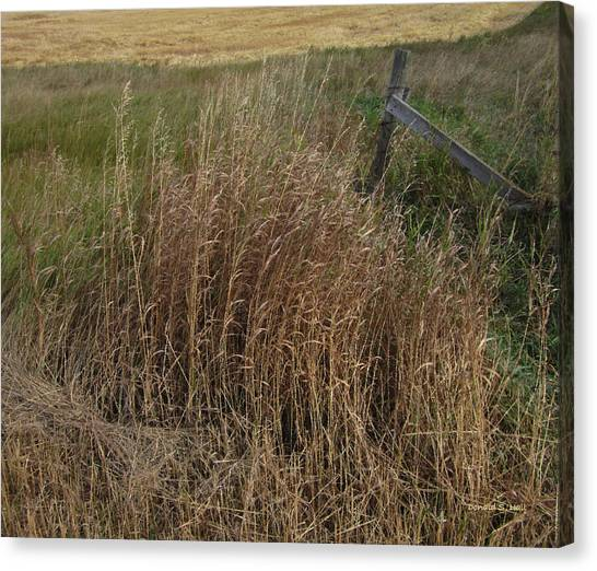 Old Fence Line Canvas Print