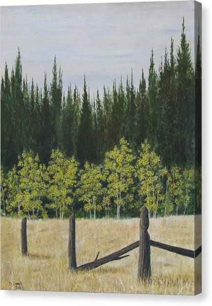 Old Fences Canvas Print by Dana Carroll