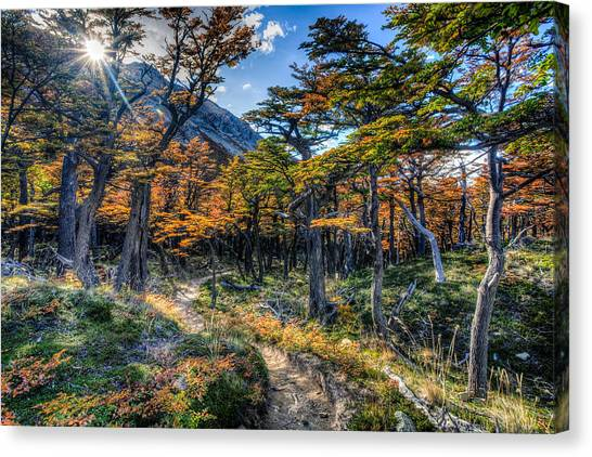 Old Forest Canvas Print by Roman St