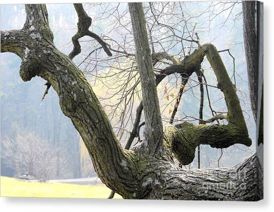 Old Friends 3 Canvas Print by Leo Symon