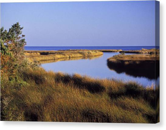 Old Hammock Creek Canvas Print