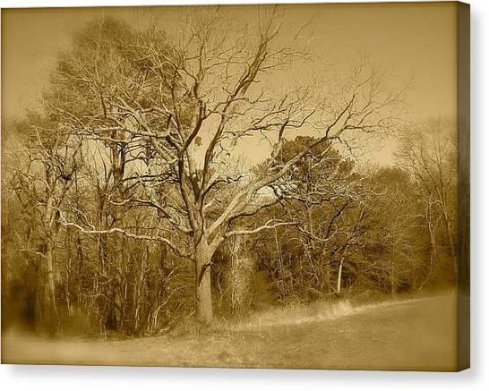 Old Haunted Tree In Sepia Canvas Print