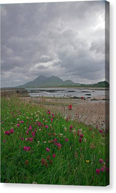 Blade Of Grass Canvas Print - Old Head, Louisburgh, Co Mayo by John Carey 2011
