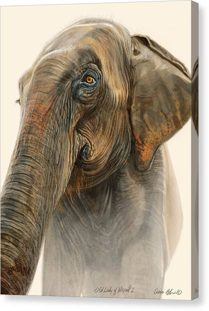 Elephants Canvas Print - Old Lady Of Nepal 2 by Aaron Blaise
