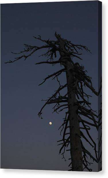 Old Man And Moon Canvas Print