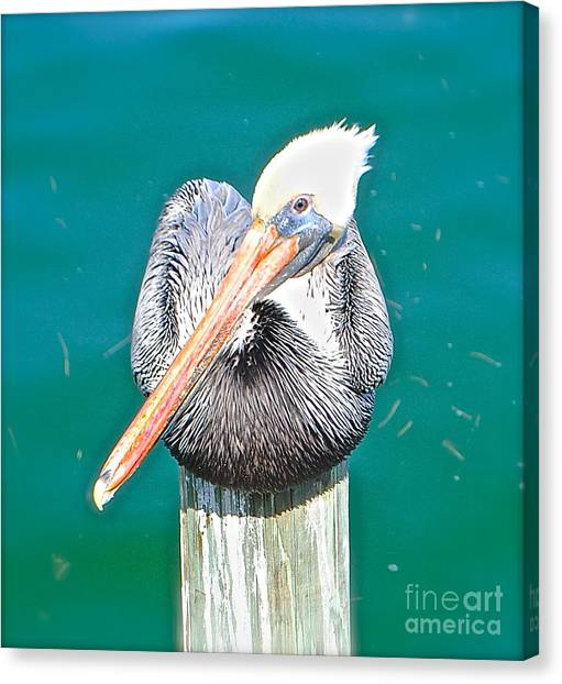 Old Man Pelican On Anna Maria Pier Canvas Print