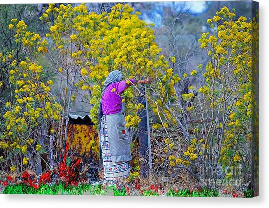 Old Mexican Woman Gathering Flowers Canvas Print