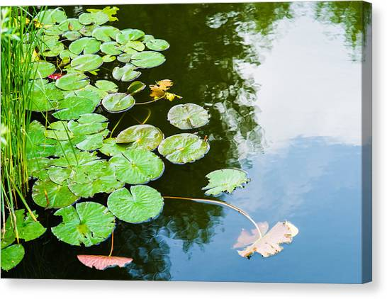 Old Pond - Featured 3 Canvas Print