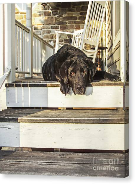 Rocking Chair Canvas Print - Old Porch Dog by Diane Diederich