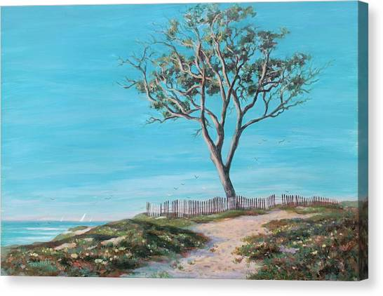 Old Tree In Carpenteria Canvas Print by Tina Obrien
