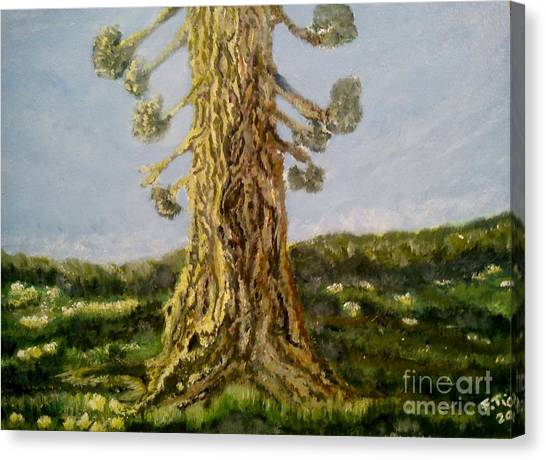 Old Tree In Spring Light Canvas Print
