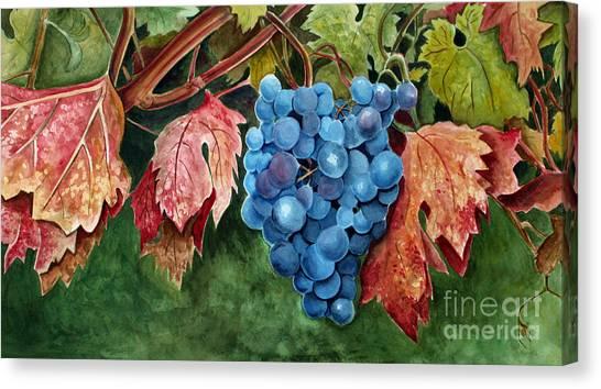 Old Vine Zinfandel Canvas Print
