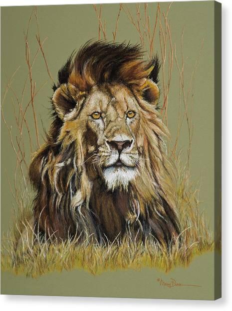 Old Warrior African Lion Canvas Print