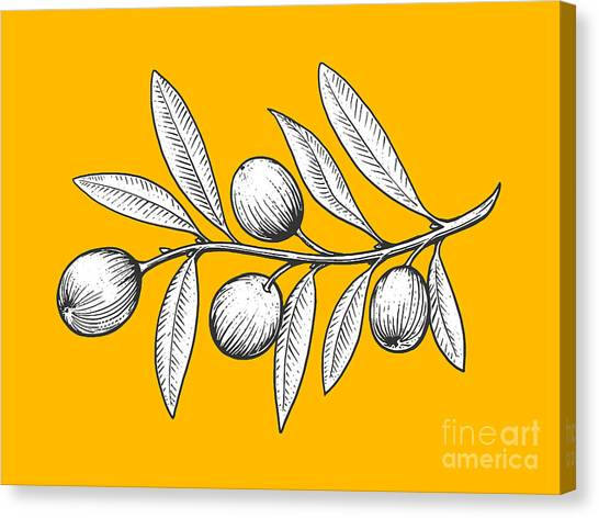 Olive Branch Engraving Style Vector Canvas Print by Alexander p