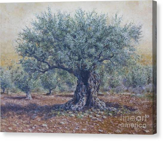 Olive In The Summer  Canvas Print