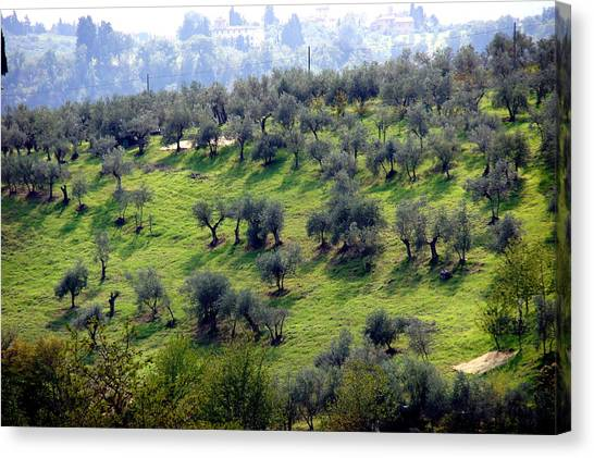 Olive Trees And Shadows Canvas Print