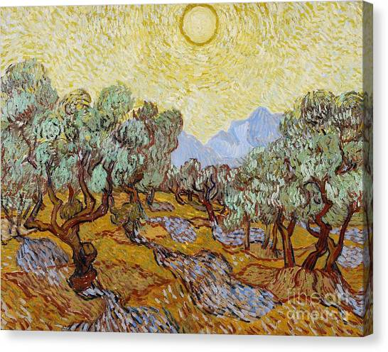 Grove Canvas Print - Olive Trees by Vincent Van Gogh