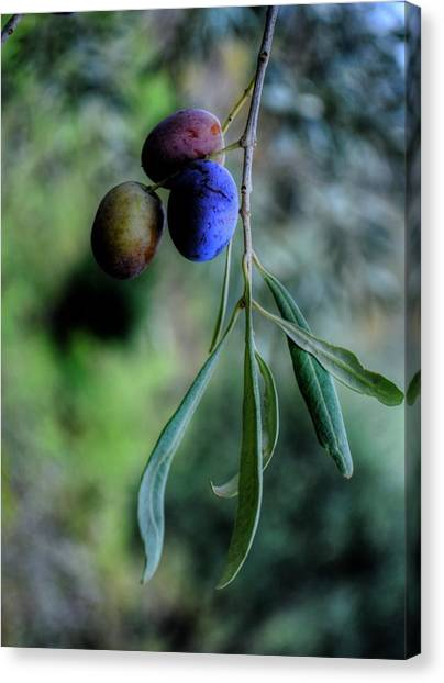 Olive Oil Canvas Print - Olive's Home... by Dini Papavasileiou