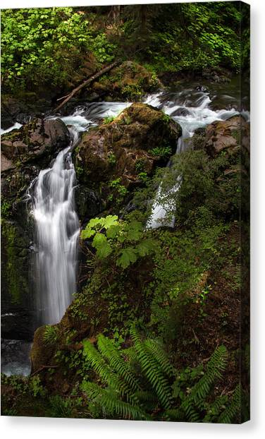 Washington Nationals Canvas Print - Olympic National Park by Larry Marshall