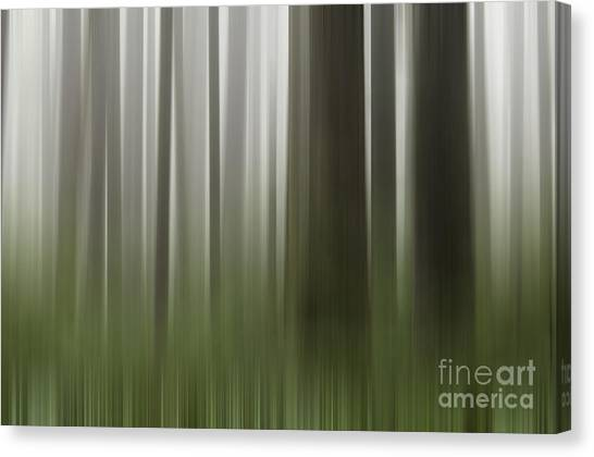 Olympic Trees Canvas Print