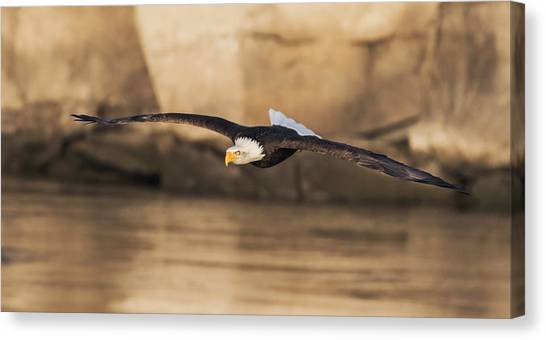 Eagle In Flight Canvas Print - On A Fishing Run by Angie Vogel