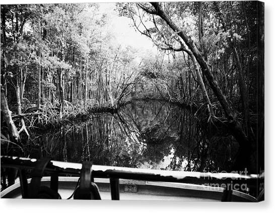 Mangrove Trees Canvas Print - On Board An Airboat Ride Through A Mangrove Jungle In Everglades City Florida Everglades Usa  by Joe Fox