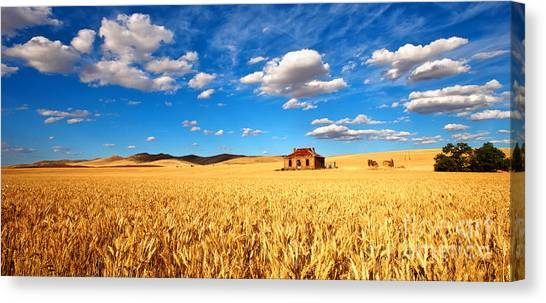 On Golden Fields Canvas Print