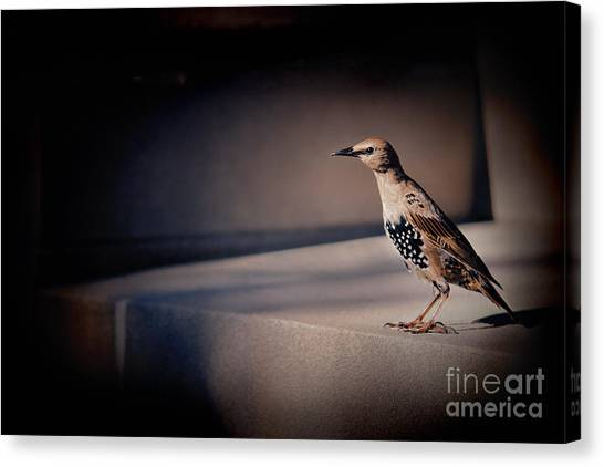 Canvas Print featuring the photograph On Guard by Kristi Swift