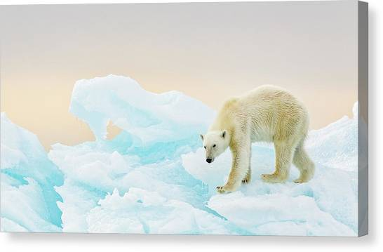 Polar Bears Canvas Print - On Ice by Joan Gil Raga