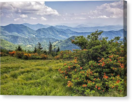 On Roan Mountain 10 Canvas Print