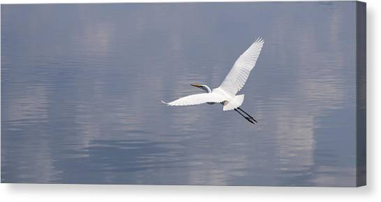 On Swift Wings Canvas Print