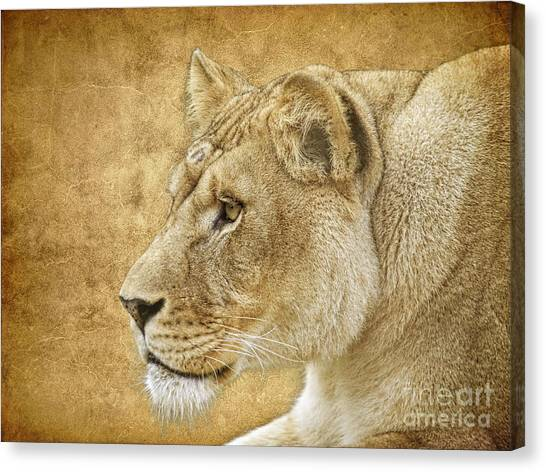 Carnivore Canvas Print - On Target by Steve McKinzie