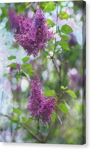 Lilac Bush Canvas Print - On The Bush by Rebecca Cozart